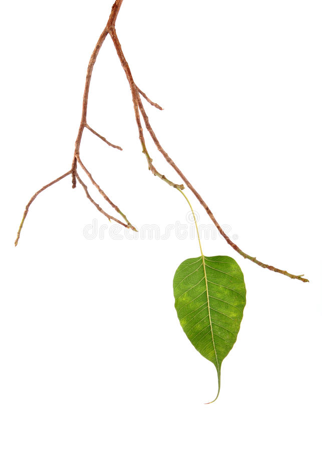 Download Last Leaf stock image. Image of stand, fall, growth, nature - 10193909