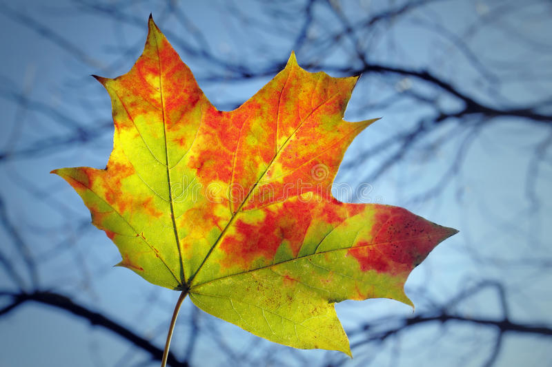 Download Last leaf stock image. Image of selective, backgrounds - 16653687