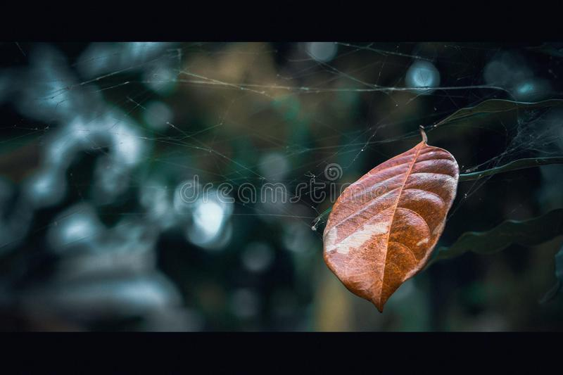 The last leaf royalty free stock images