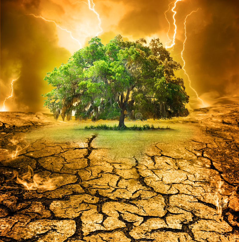 Last oak. A large spectacular lone oak tree on a hill that is scorched. The last remaining grass being encroached by the cracked earth. Concept for global