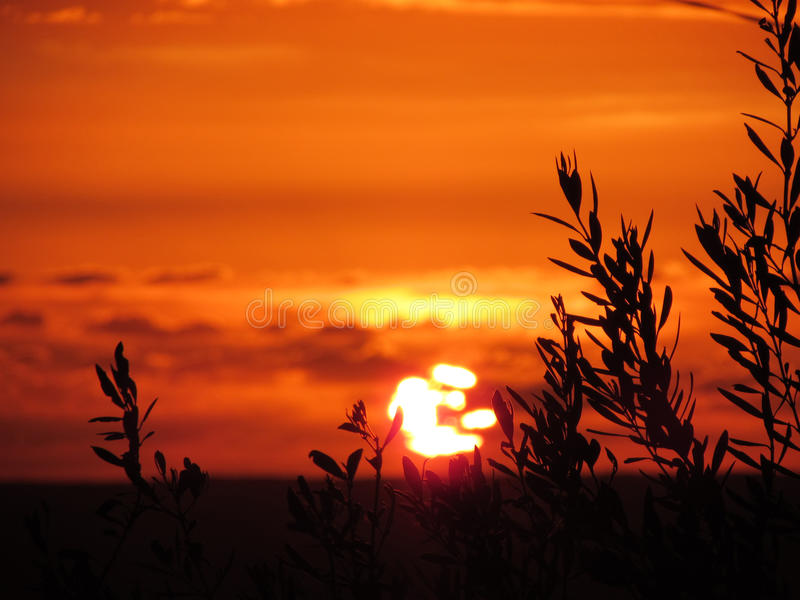 The last rays of sun kiss the olive trees - Sicily sunset stock photography