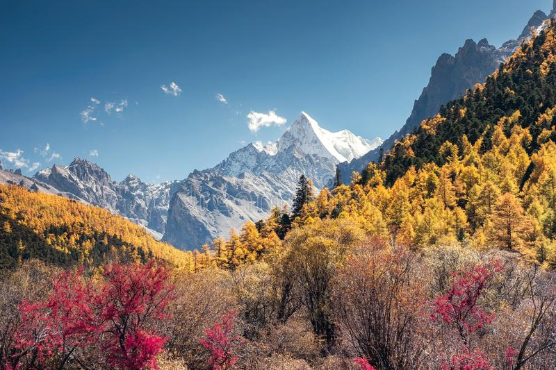 The Last Shangri-La with Chana Dorje mountain in autumn pine forest. Yading nature reserve royalty free stock photos