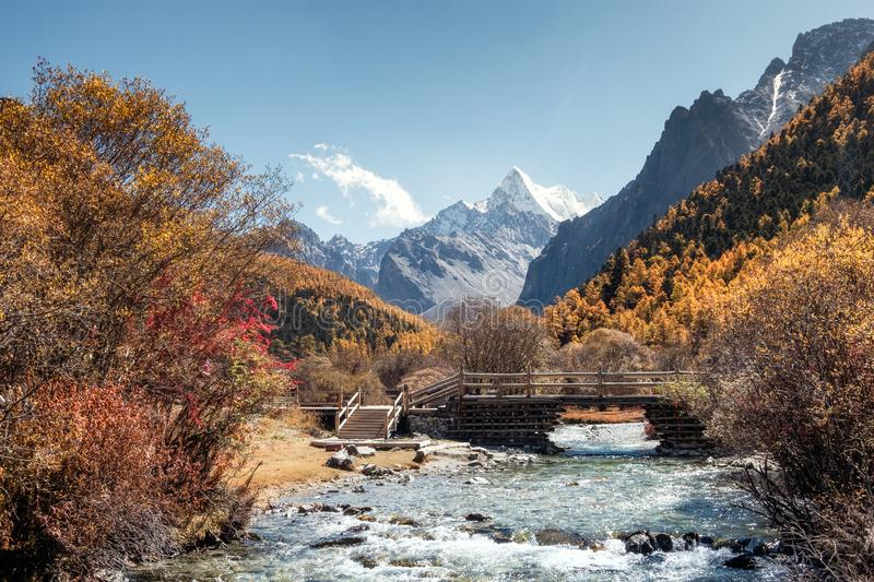The Last Shangri-La with Chana Dorje mountain in autumn pine forest. Yading nature reserve stock photography