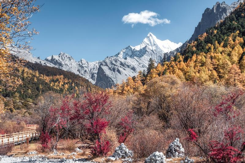 The Last Shangri-La with Chana Dorje mountain in autumn pine forest at Yading. Nature reserve royalty free stock photos