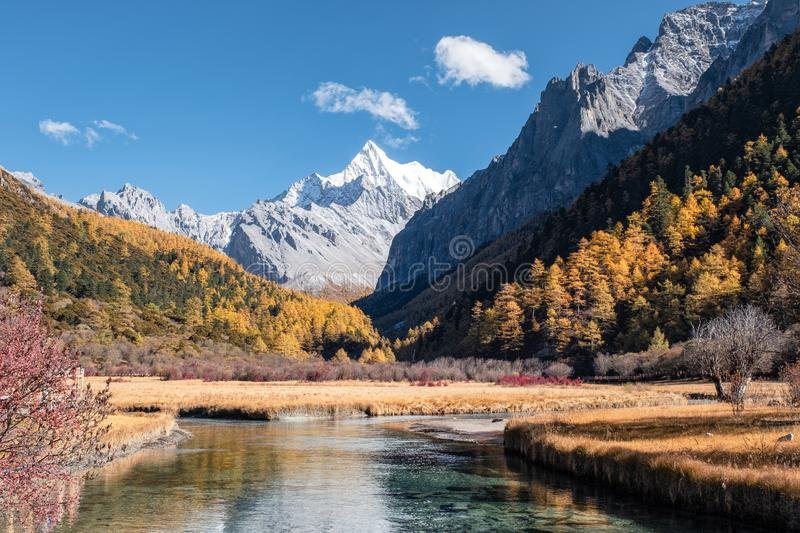 Last Shangri-La of Chana Dorje mountain with colorful pine forest in autumn. At Yading nature reserve, Daocheng, China royalty free stock photos