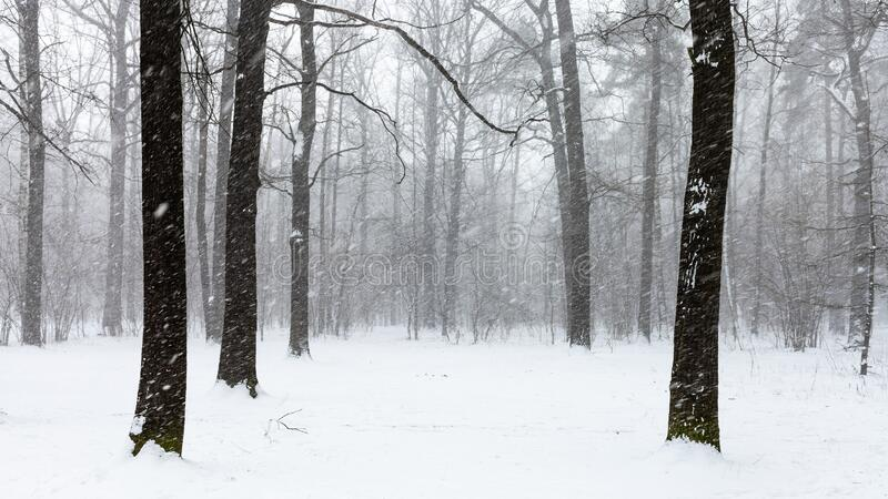 Last snow blizzard in forest of city park stock photos