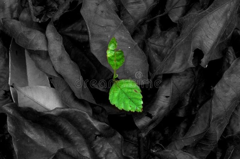 Last surviving leaf stock photography