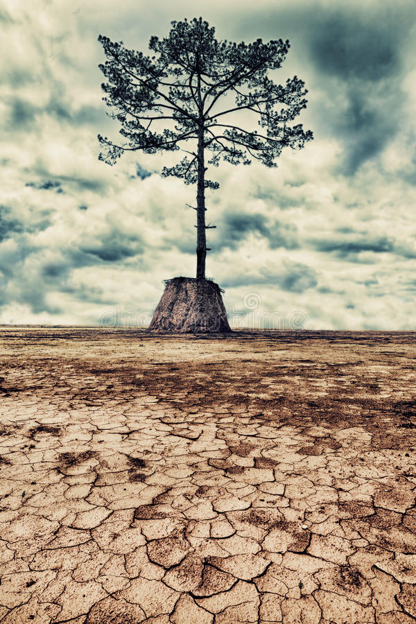 Download The last tree stock image. Image of environmental, last - 25815755