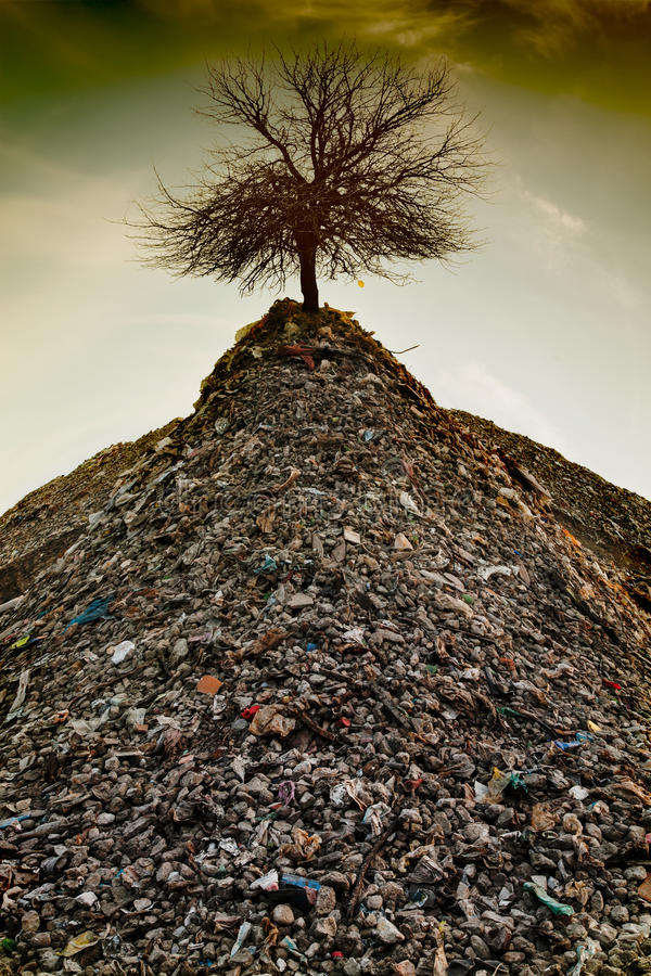 Download The last tree stock image. Image of dirt, garbage, leaf - 33429797