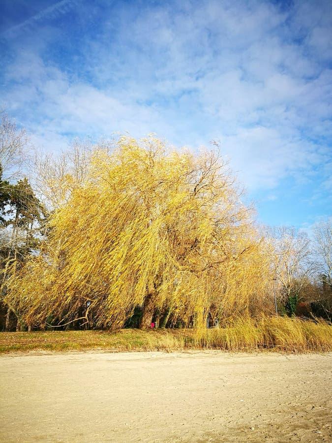 Download Last Tree Stock Photo - Image: 83716634