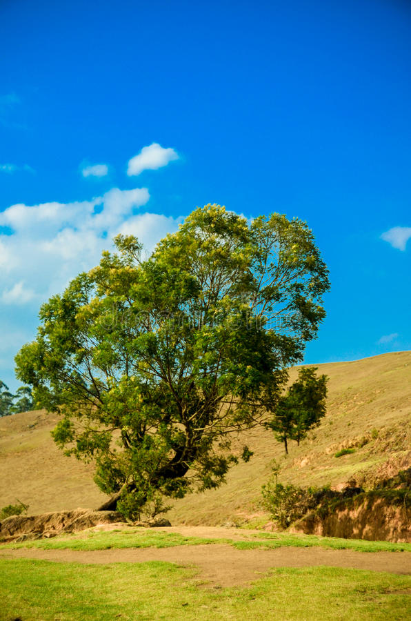 Last word of hope. In a lonely sunny day all the trees were exhausted and gone to ashes, bu this tree stays with full of hope till the next rain comes stock photo