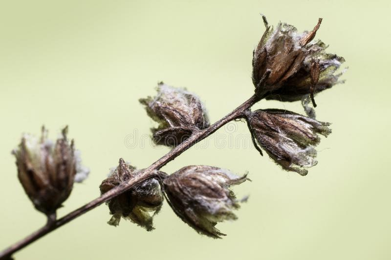 Last year`s dry flowers royalty free stock images