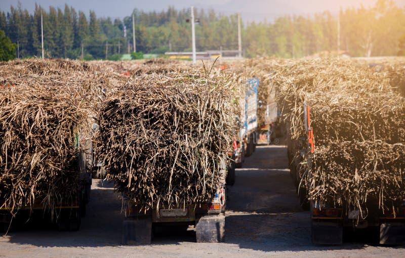 Lastbil för sockerrotting som laddas mycket i fältet med sikt för blå himmel royaltyfri bild