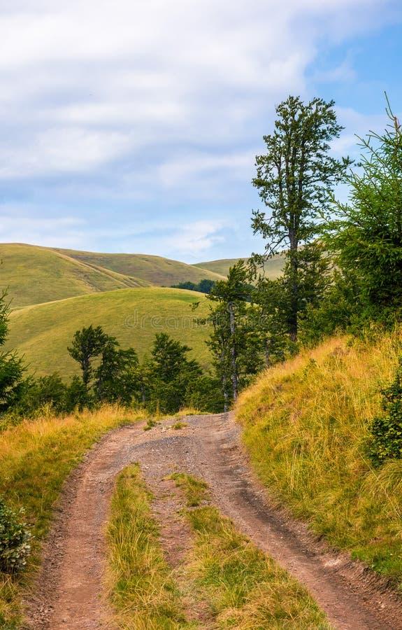 Lastbilväg till och med forested kullar av Carpathians royaltyfria foton