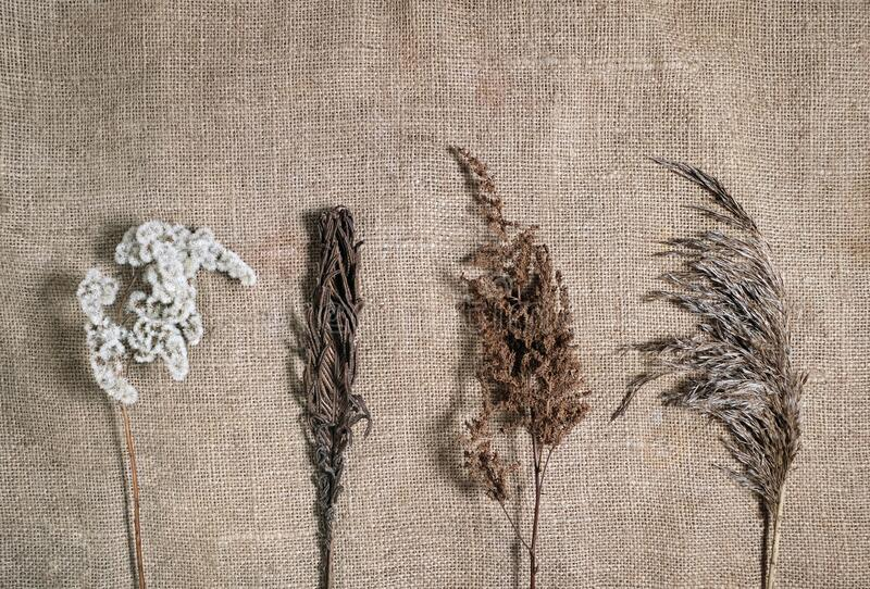 Lasting faded sustainable flowers on natural canvas background. Four different dried flowers on earth tone color burlap. Minimal stock photography