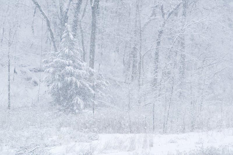 lasu śniegu burza zdjęcie stock