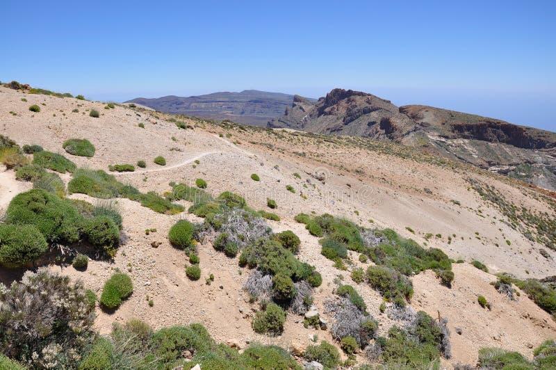 Lasu Canadas Del Teide pasmo obrazy stock