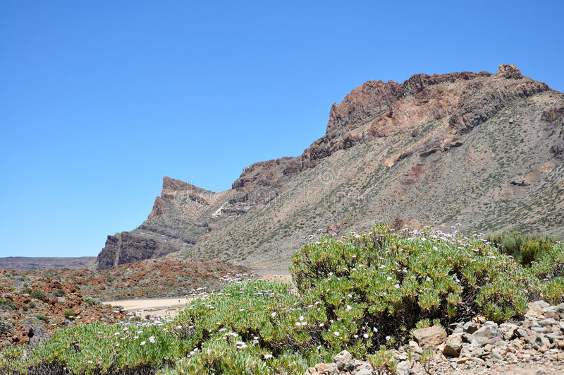Lasu Canadas Del Teide pasmo obrazy royalty free