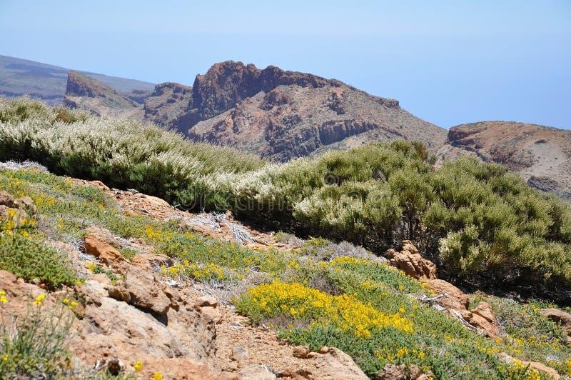 Lasu Canadas Del Teide pasmo zdjęcie stock