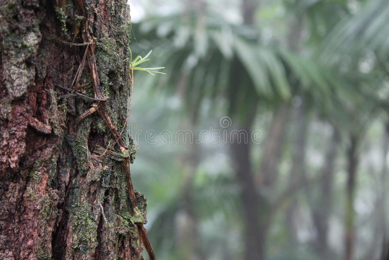 Lasu deszcz obrazy stock