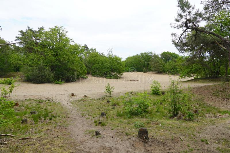Lasu i piaska diuny w holandiach obraz royalty free