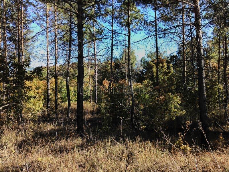 Lasu krajobraz na górze zdjęcie stock