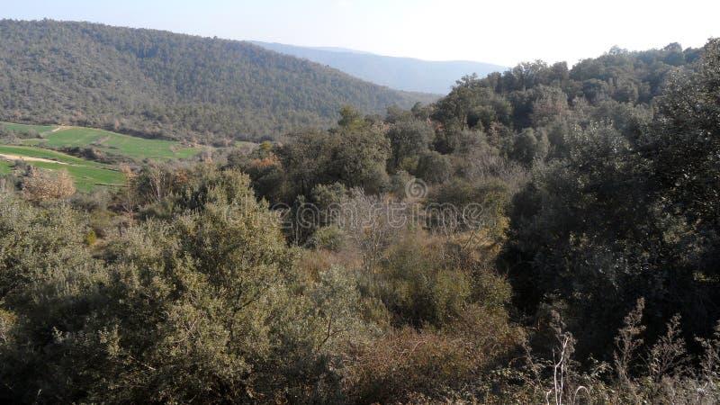 Lasu krajobraz pod promieniami midday słońce w Hiszpania zdjęcia royalty free