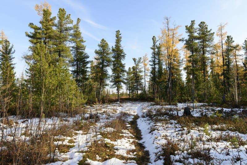 Lasu krajobraz w jesieni w Rosyjskiej tajdze zdjęcia stock
