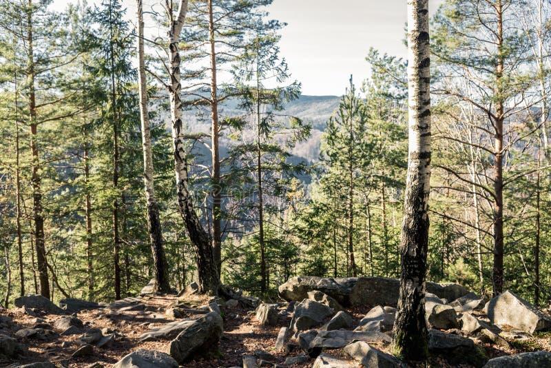 Lasu krajobraz z kamień ramą na ogół zdjęcie stock