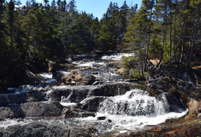 Lasu krajobraz z siklawą otaczającą wiecznozielonymi drzewami fotografia royalty free