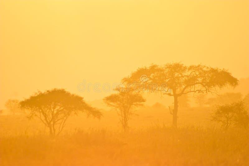 lasu krajobrazu mgły ranek fotografia stock