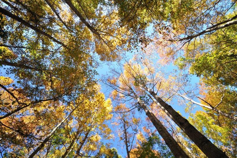lasu niebo zdjęcia stock