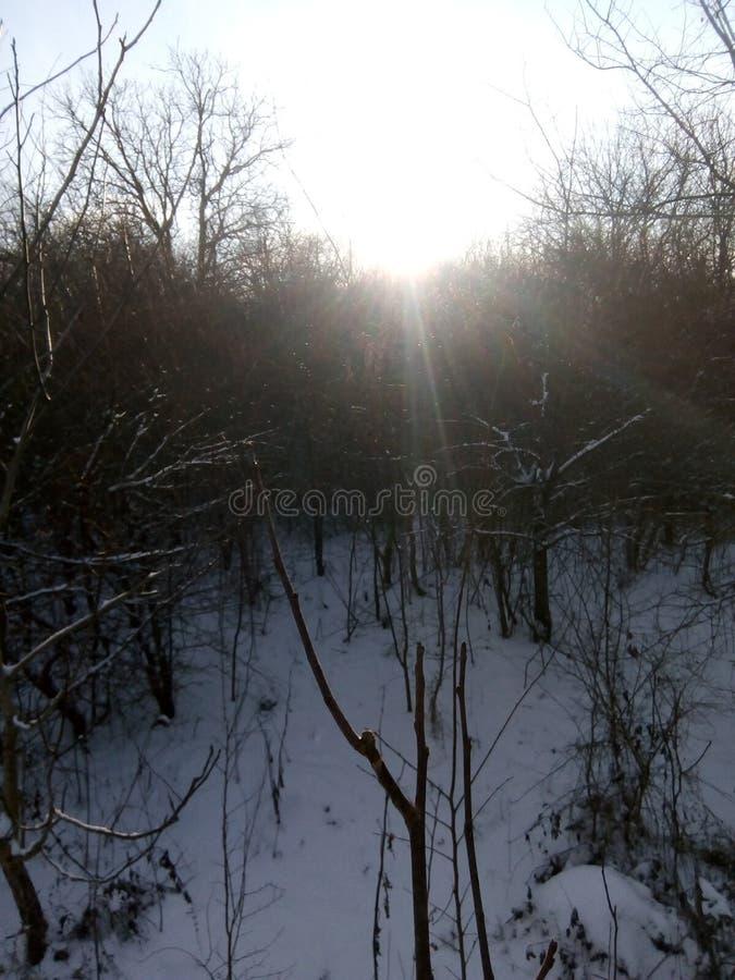 Lasu strzał obraz stock