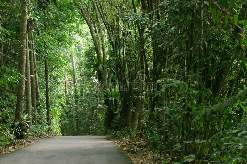 lasy deszczowe zdjęcia royalty free