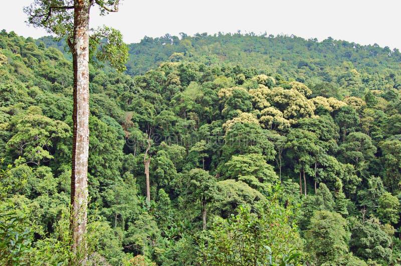 lasy deszczowe zdjęcie royalty free