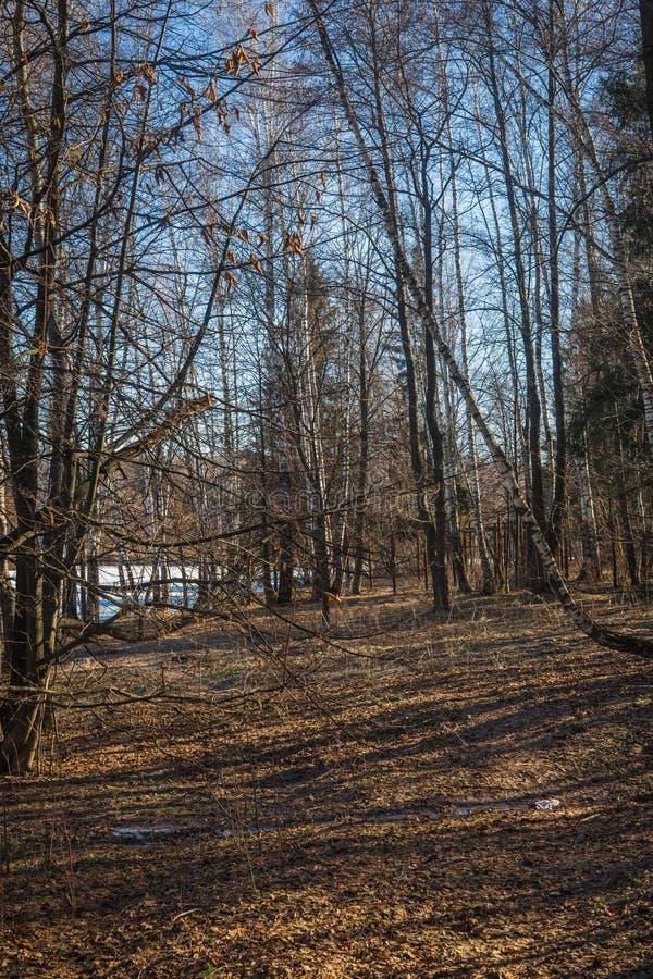 Lasy na brzeg jezioro z wioską na opposite zdjęcia stock