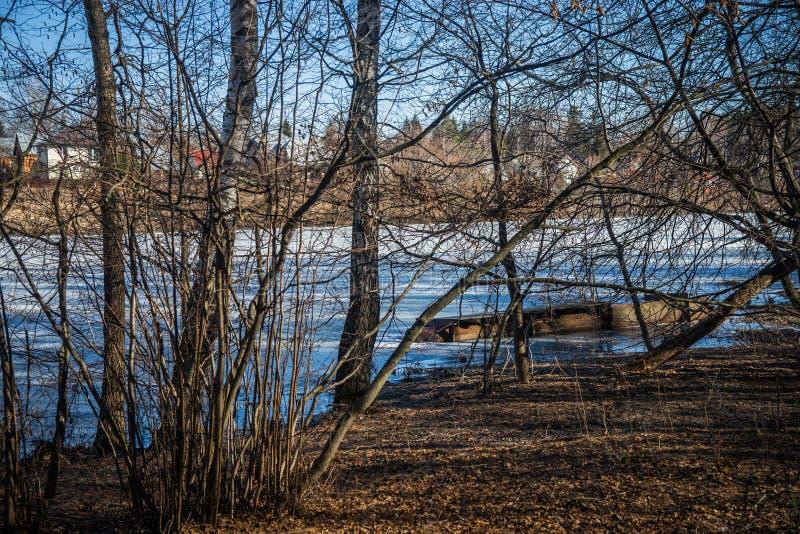 Lasy na brzeg jezioro z wioską na opposite fotografia royalty free