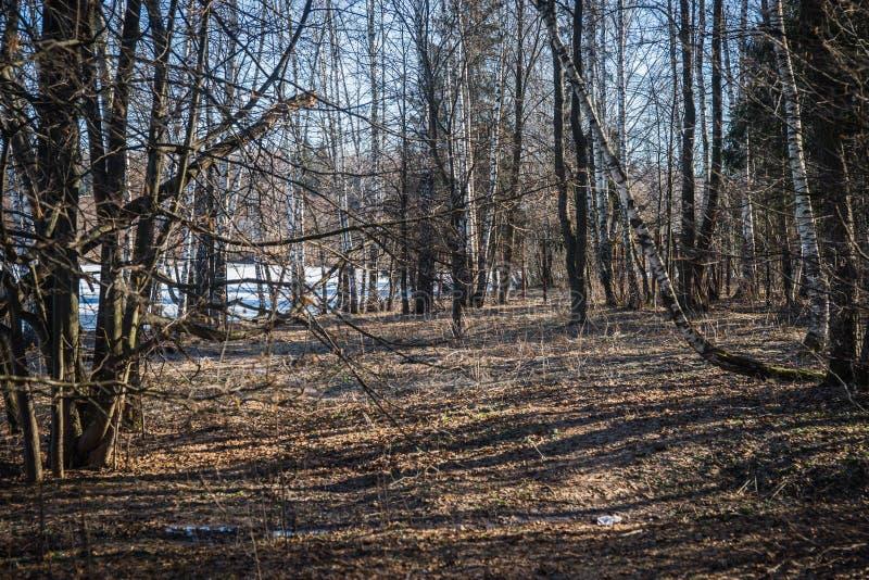 Lasy na brzeg jezioro z wioską na opposite zdjęcia royalty free