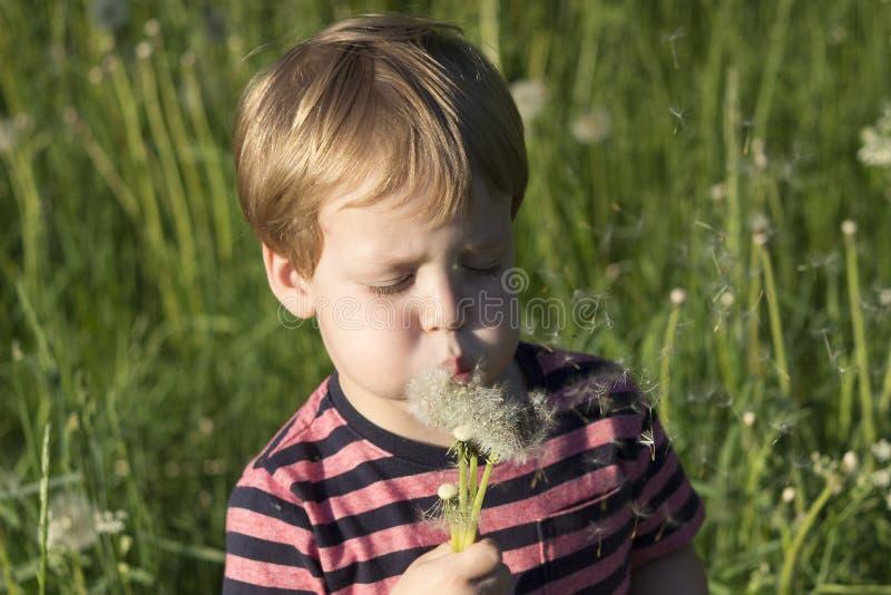 3 lat chłopiec podmuchowy dandelion w letnim dniu fotografia royalty free