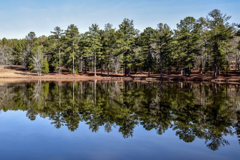 Download Lat Drzewa I Niebo Odbijaliśmy W Jezioro Wodzie Zdjęcie Stock - Obraz złożonej z nieba, forrest: 106911862