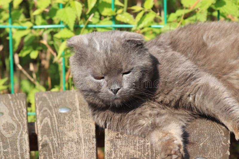 Lat hopfällbar katt royaltyfri foto