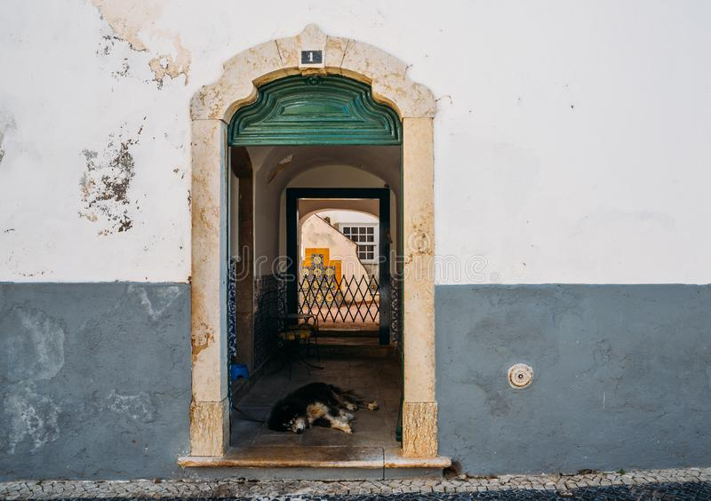 Lat hund på den lantliga dörröppningen i Faro, Portugal arkivfoton