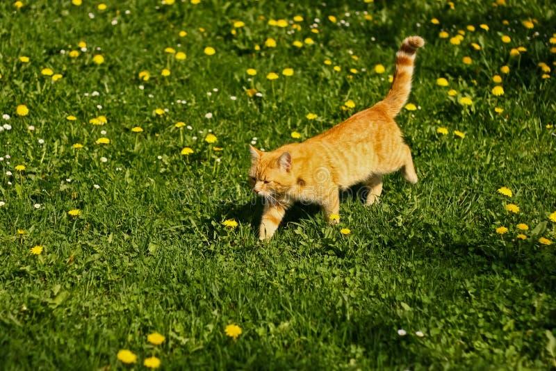 Lat katt i solen royaltyfria foton