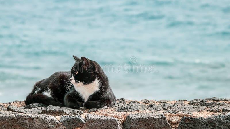 Lat katt i solen på en stenvägg royaltyfri fotografi