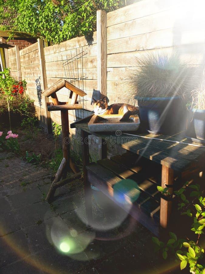 Lat katt som tycker om de sista solstrålarna av dagen royaltyfria foton