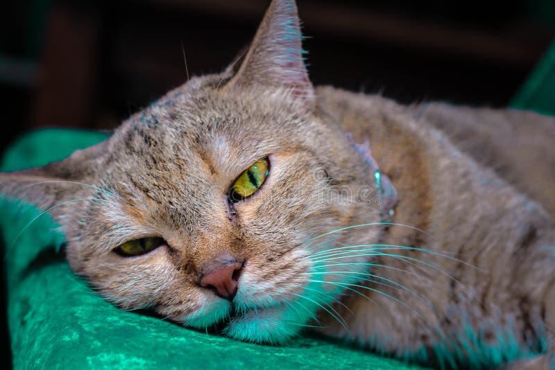 lat sömnigt för katt arkivfoton