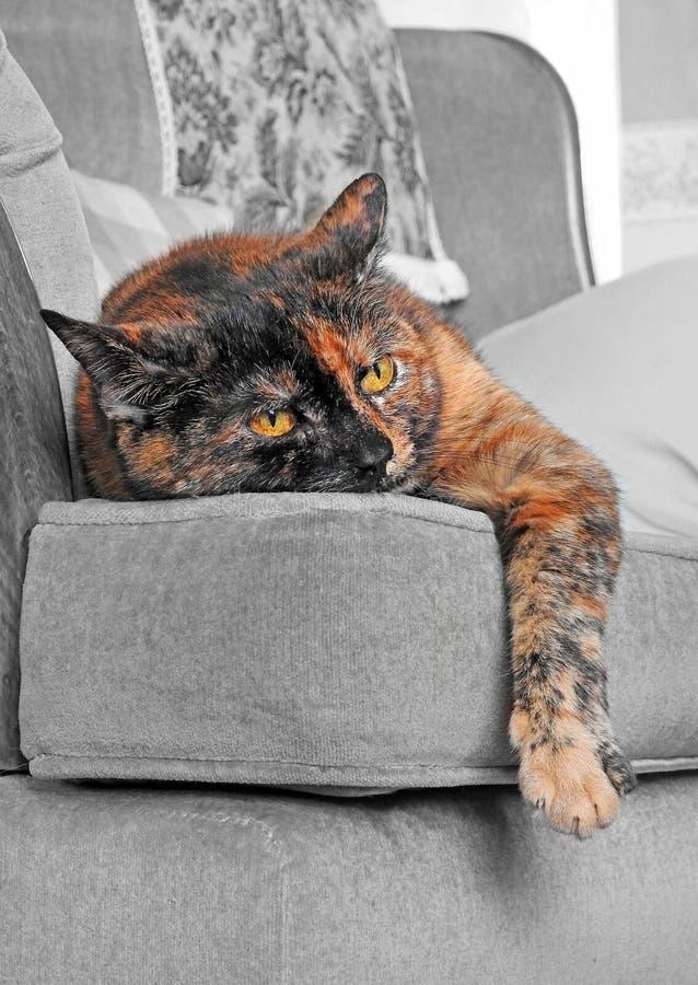 Lat söndag eftermiddagkatt på soffastol arkivfoto