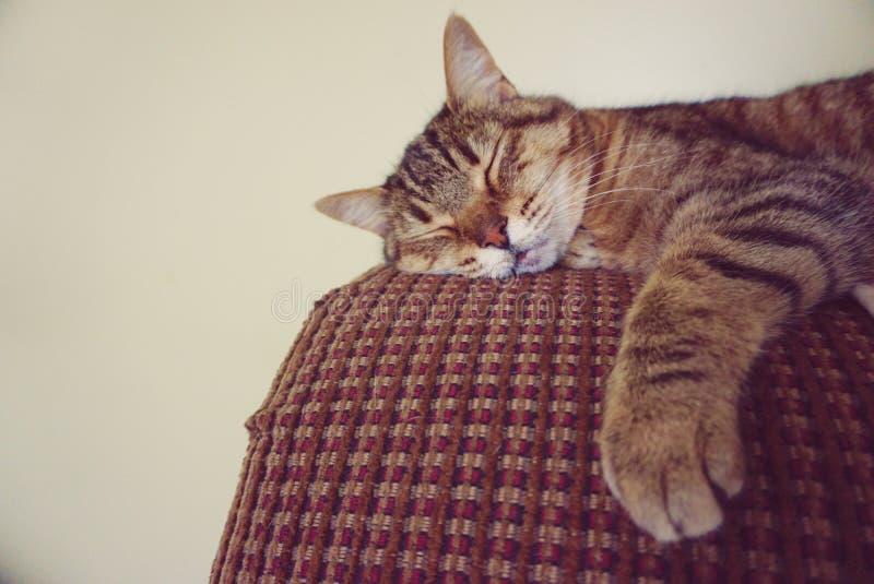Lat sova för katt arkivfoto