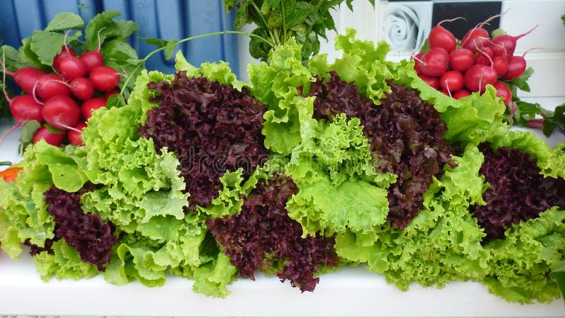 Lat warzywa obrazy stock