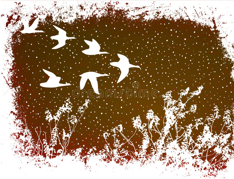 latać ptaków ilustracji